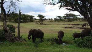 PN Tarangire Lagos de Momela PN Arusha Expedición Safari AFRICA ETERNA Kenia Tanzania Febrero 2018 Diego Ortega Alonso Paleolitico Vivo